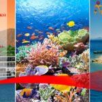 Le Caire - Aswan - Louxor - Hurghada - Sharm Sheikh